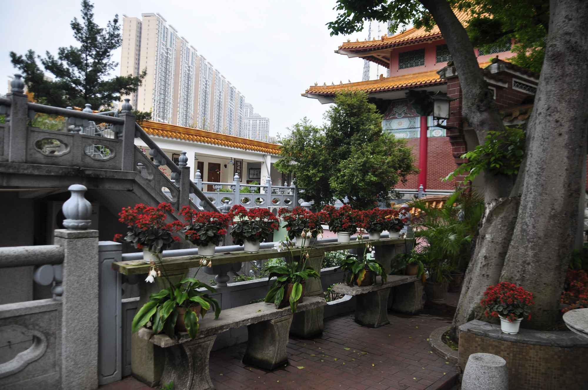 Pou Tai Un Monastery flowers
