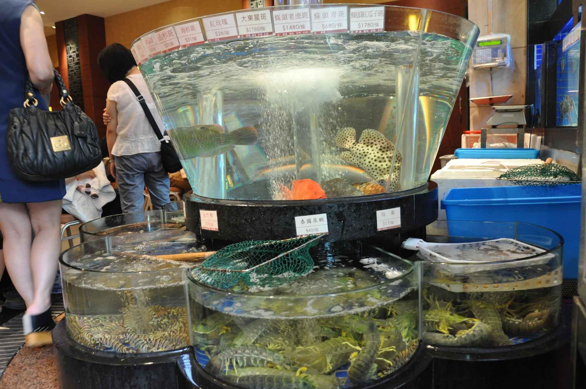 Tou Tou Koi Macau fish tank