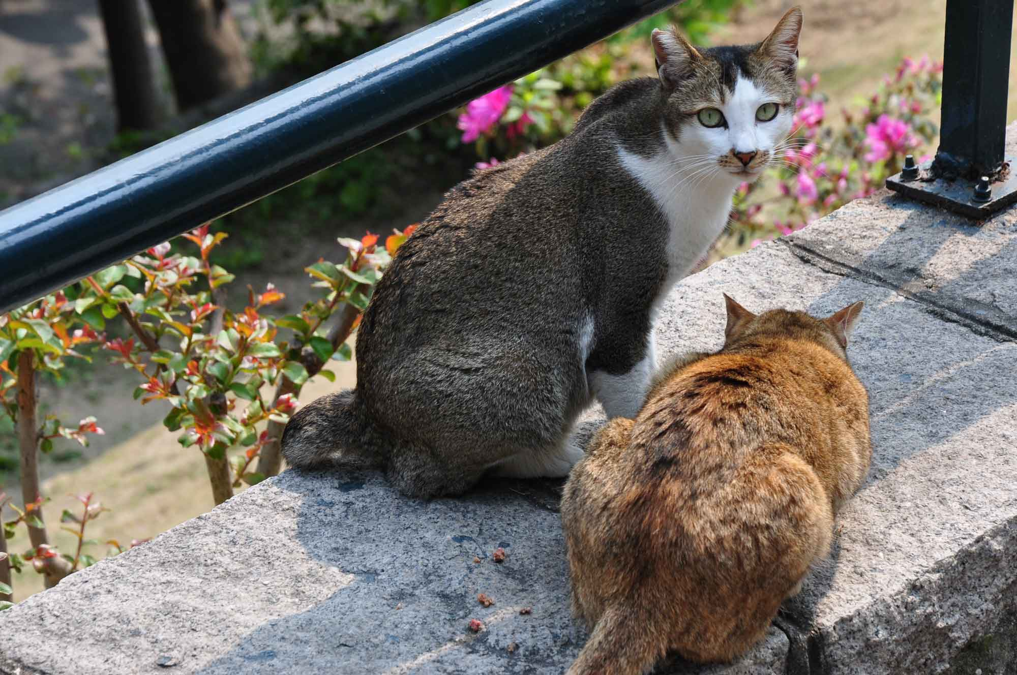 Mong Ha Park cats